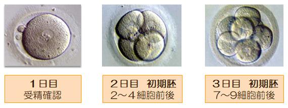 胚の発育1