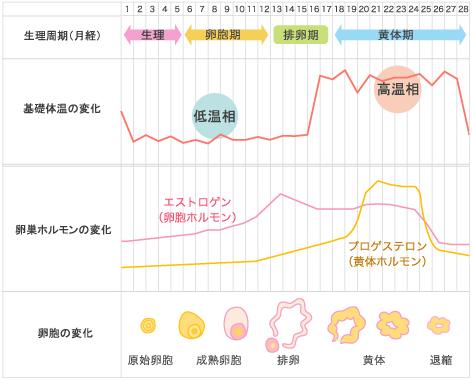 月経周期の図