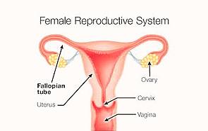 女性不妊について